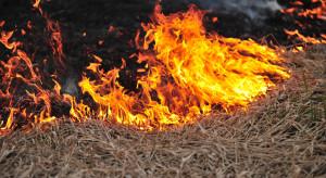 ARiMR przestrzega: Za wypalanie traw grozi utrata dopłat!