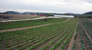 Rosja: Stan zasiewów wiosennych warzyw