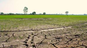 Ekspert: Ocieplenie klimatu powoduje ogromne zmiany w rolnictwie (wideo)