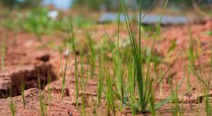 Niemcy: Długofalowa prognoza wilgotności gleby będzie ostrzegać rolników przed suszą