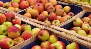 Chłodnie nadal pełne owoców. Ponad 940 tys. ton jabłek zalega!