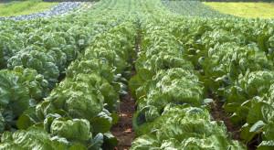 XenTari – nowy, biologiczny środek do zwalczania gąsienic w uprawach