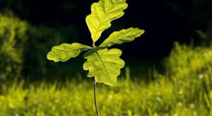 Olsztyn: Leśnicy posadzą ok. 20 mln drzewek
