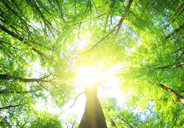 Ruszył nabór wniosków na inwestycje zwiększające odporność ekosystemów leśnych