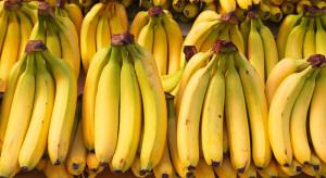 Niemcy: Kokaina wartości 25 mln euro ukryta pomiędzy bananami w dyskoncie
