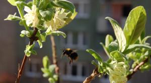 Elbląg rezygnuje z oprysków na kleszcze - powodem obawa o pszczoły