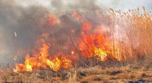 PSP: od początku roku niemal 1,5 tys. pożarów lasów i 25 tys. pożarów traw