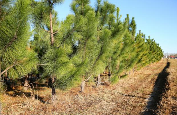 ARiMR: nabór wniosków na wsparcie inwestycji leśnych od 2 maja