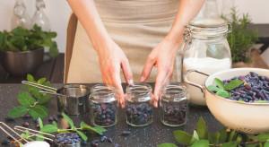 Nutracevit: chcemy wspierać ekologiczne plantacje jagody kamczackiej