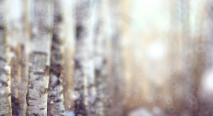 Prognoza pogody na najbliższe dni: chłód, opady deszczu ze śniegiem