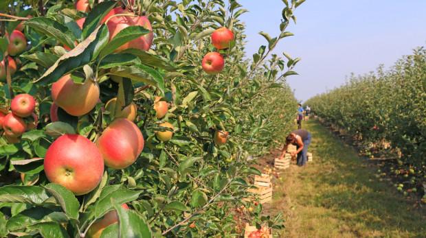 Nie będzie ułatwień w zatrudnianiu cudzoziemców w ramach pracy sezonowej