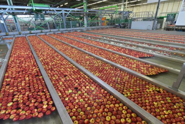 W chłodniach wciąż sporo jabłek. Brakuje ofert handlowych