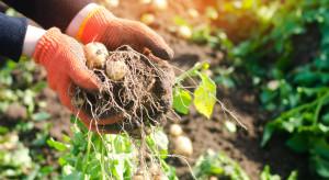 Ubiegłoroczne ciepłe lato wpłynęło na niemiecki rynek warzyw