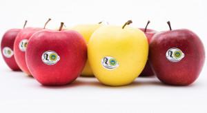 Jabłka Grójeckie wprowadzają usługę dostawy jabłek do biur