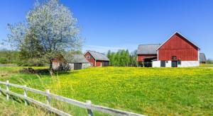W Polsce rośnie liczba gospodarstw rolnych