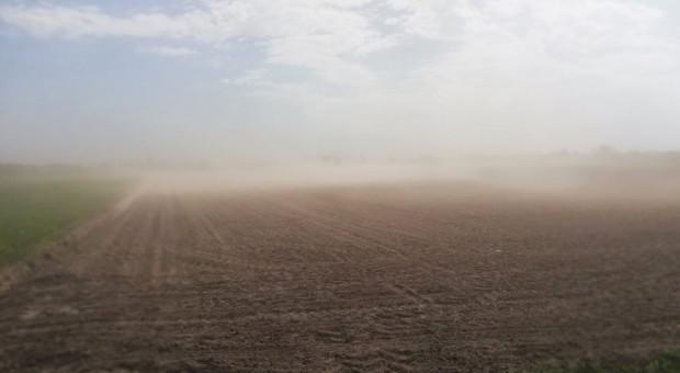 Silnie wiejący wiatr wzmaga działanie erozji wietrznej