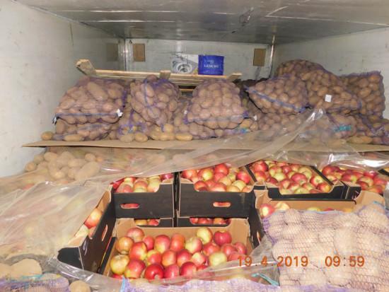 Rosja: Zniszczono 4 tony jabłek. Były przewożone z białoruskimi ziemniakami