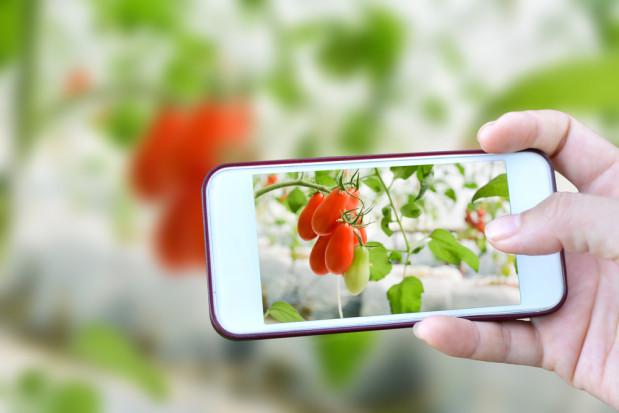 Opole: Opracowano system nadzoru nad uprawami wykorzystujący technologię 5G