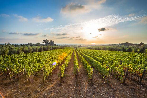 Toskania: Winorośl rośnie przy muzyce Mozarta