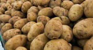 W Danii pierwsze tegoroczne ziemniaki kosztują 863 zł za kilogram