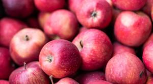 Tempo wzrostu eksportu jabłek niewystarczające, aby rozwiązać problem niskich cen