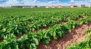 Corteva zachęca rolników, by przetestowali działanie fungicydu Zorvec