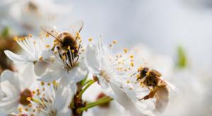 PIORiN: Chroniąc rośliny, chrońmy również pszczoły