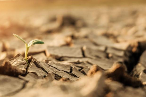 Rolnicy: Brak deszczu może wywołać większe szkody niż w ubiegłym roku