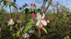 Nawadnianie sadów wiosną – ważny jest monitoring wilgotności gleby