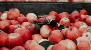 Polscy sadownicy rozpoczną sezon 2019/20 nawet z ponad 100 tys. t zapasów jabłek