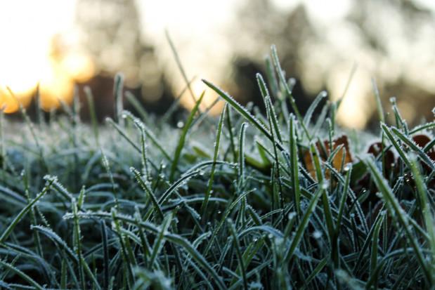 IMGW ostrzega: przymrozki w północnej połowie kraju, deszcz i śnieg na południu