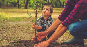 """KE: Możliwe wprowadzenie programu edukacyjnego """"Drzewa dla dzieci"""""""