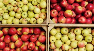 Niskie ceny jabłek deserowych. Od początku roku wzrosły jedynie o 2,7%