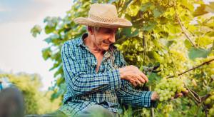 Nastroje francuskich rolników coraz lepsze