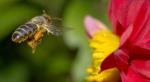 FC Pszczółka rozpoczęła akcję ratowania dziko żyjących pszczół