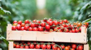 Rosja: Produkcja warzyw, owoców i jagód ma wzrosnąć w 2019 roku