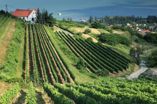 Minister Wegier: kraje Europy Środkowej chcą utrzymania wspólnej polityki rolnej