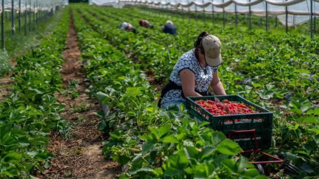 Resort rolnictwa ws. składki zdrowotnej opłacanej za pomocników rolnika