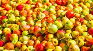 Sandomierski starosta: Wciąż nie ma pieniędzy za jabłka sprzedane Eskimosowi