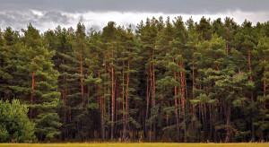 Warmińsko-mazurskie: drzewostany zagrożone przez brudnicę mniszkę