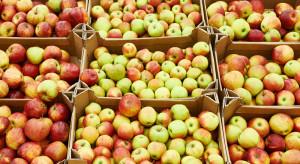 Analityk IERiGŻ: Spore różnice w cenach jabłek w okresie kwiecień 2018 vs. 2019