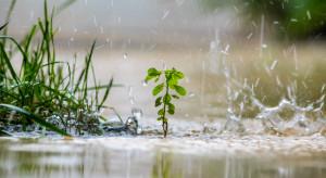 Włochy: Ulewne deszcze spowodowały podtopienia w sadach i uprawach