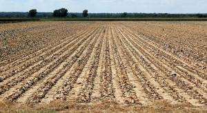 Resort rolnictwa monitoruje zagrożenie wystąpienia suszy w uprawach rolnych