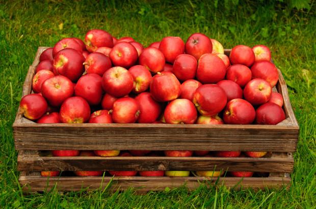 Przymrozki przetrzebiły sady. Tymczasem ceny jabłek są wciąż poniżej oczekiwań