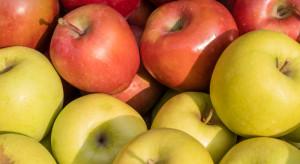 Francuzi o polskich jabłkach: Atakują nasz rynek!
