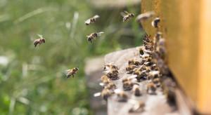 """Komisja Europejska rejestruje inicjatywę obywatelską """"Save the bees!"""""""