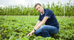 Zadbaj o plantację truskawek w okresie kwitnienia (wideo)