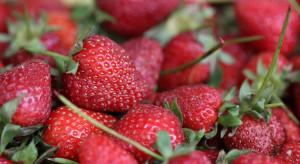 Spadek cen truskawek na Giełdzie Goławin