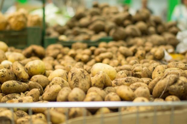 W kwietniu br. ziemniaki były droższe o 87 proc. niż rok wcześniej