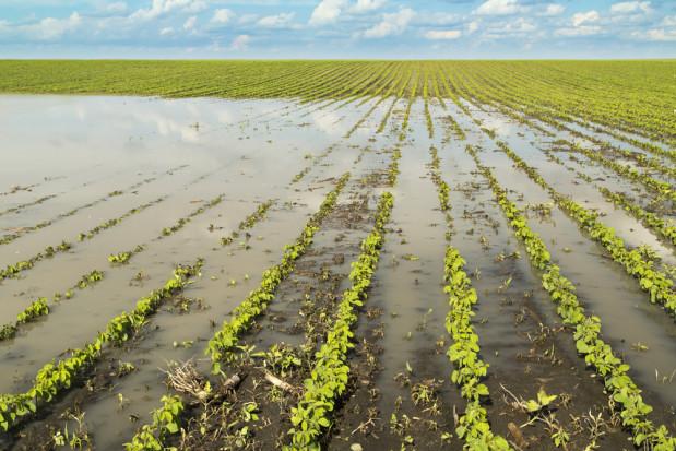 Trudna sytuacja na polach. Turbulencje pogodowe mogą wpłynąć na ceny produktów (video)